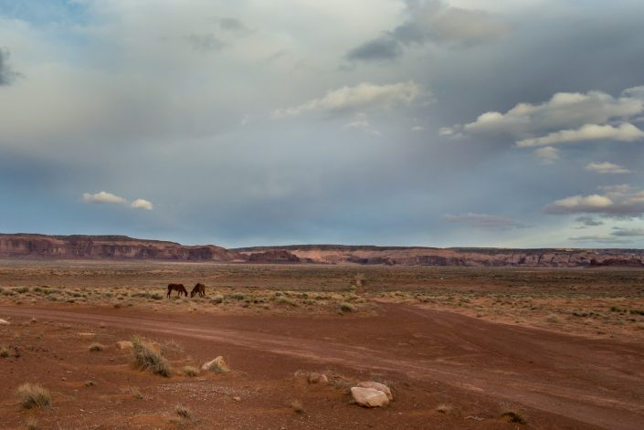 Mustang Horses, Monument Valley