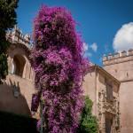 Alcazar, Bougainvillea, Sevilla