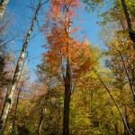 Minnewaska State Park, fall foliage