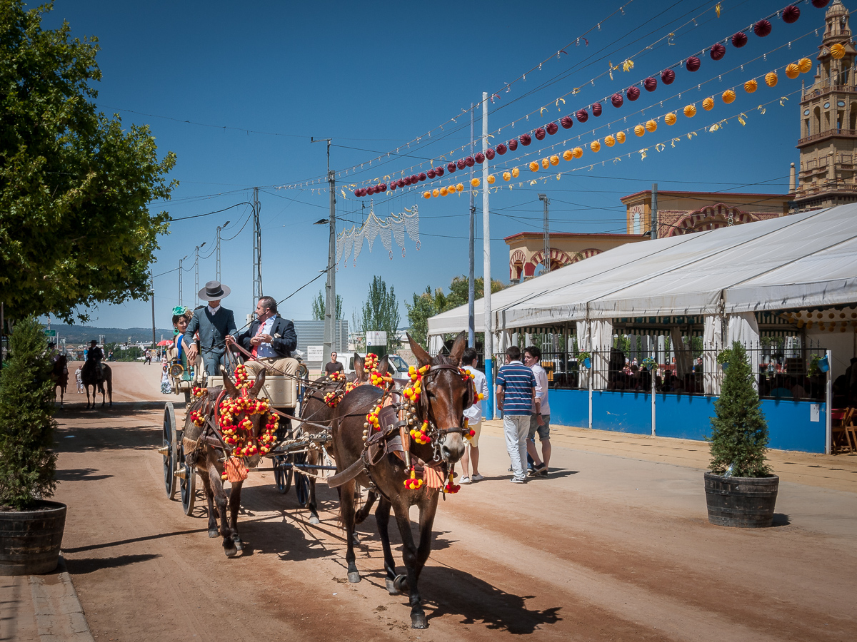 Feria de Cordoba, carriage and horses