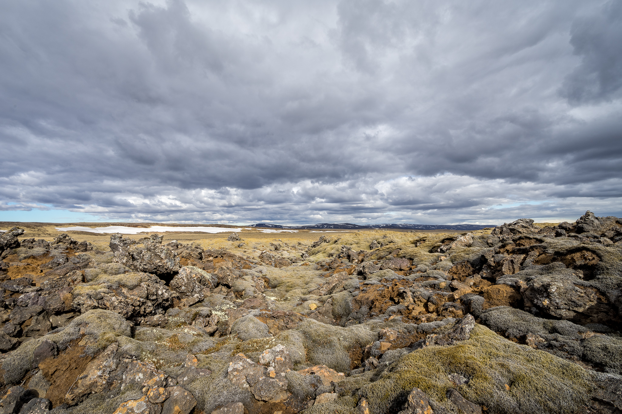 Lava fields covered in moss.. Iceland