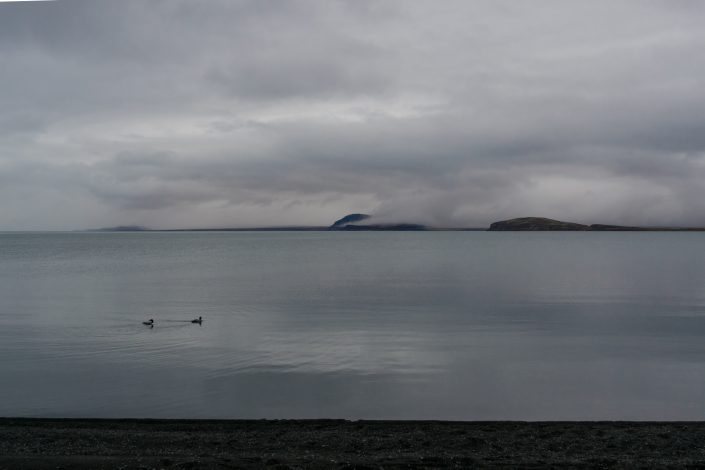 The shores of Thingvallavatn, Great Northern Divers.