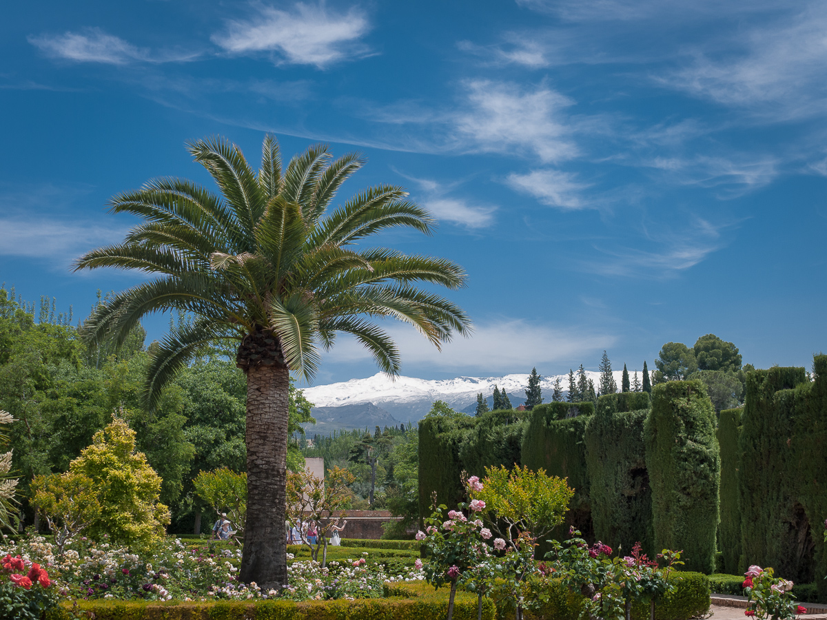 Alhambra-Granada, Palm tree and views of snowcapped Sierra Nevada